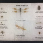 Entomology2