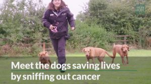 Cancer Detecting Dogs